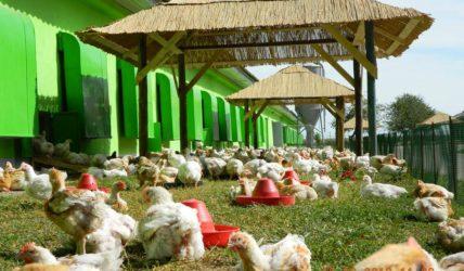 """Agricola Internațional pierde procesul pentru marca """"gospodarilor"""". Sentința nu este definitivă"""