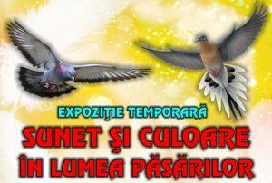 """Diferite rase de porumbei și găini, la Vivariu. Mâine se deschide expoziția """"Sunet și culoare în lumea păsărilor"""""""