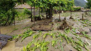 Prăpăd în agricultură! Ploile abundente și inundațiile au adus pagube și de 100% pentru fermieri